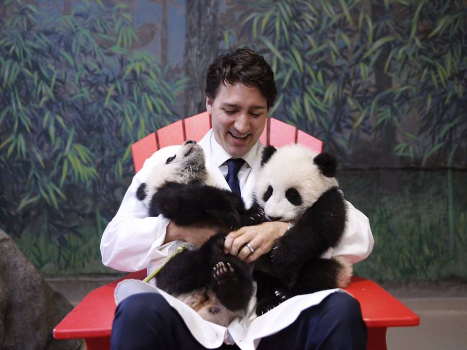 Canadian prime minister Justin Trudeau gets up close and personal with two panda cubs at the Toronto Zoo. (Facebook)